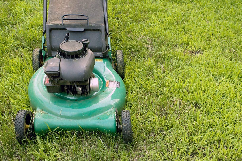 garden maintenance in you backyard in Adelaide