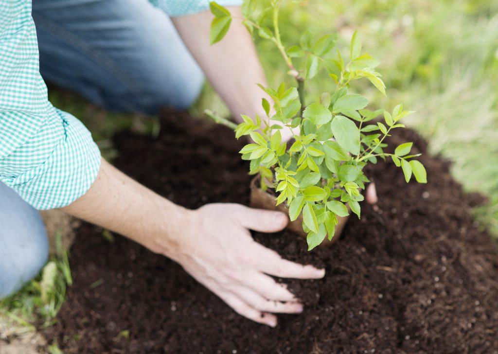 garden activity to maintain your Adelaide garden